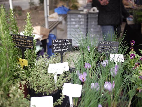 Bloomsbury Farmers Market-1