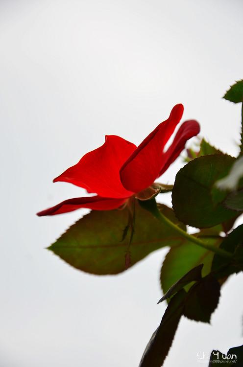 2012士林官邸玫瑰季26.jpg