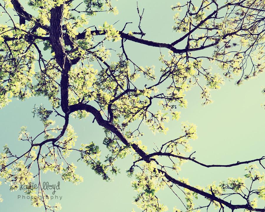 Tree-in-Spring---8x10