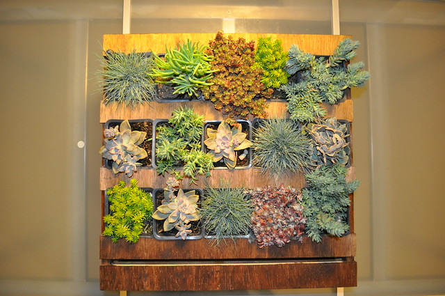 Vertical succulent garden box Flickr Photo Sharing
