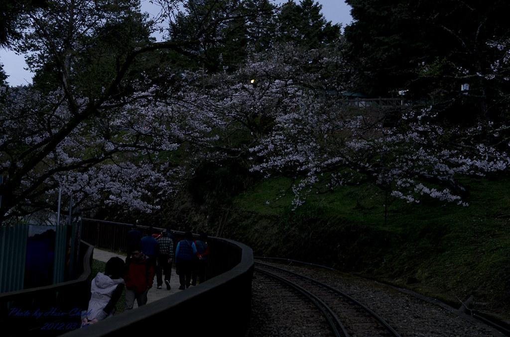 20120310-阿里山賞櫻記(2)