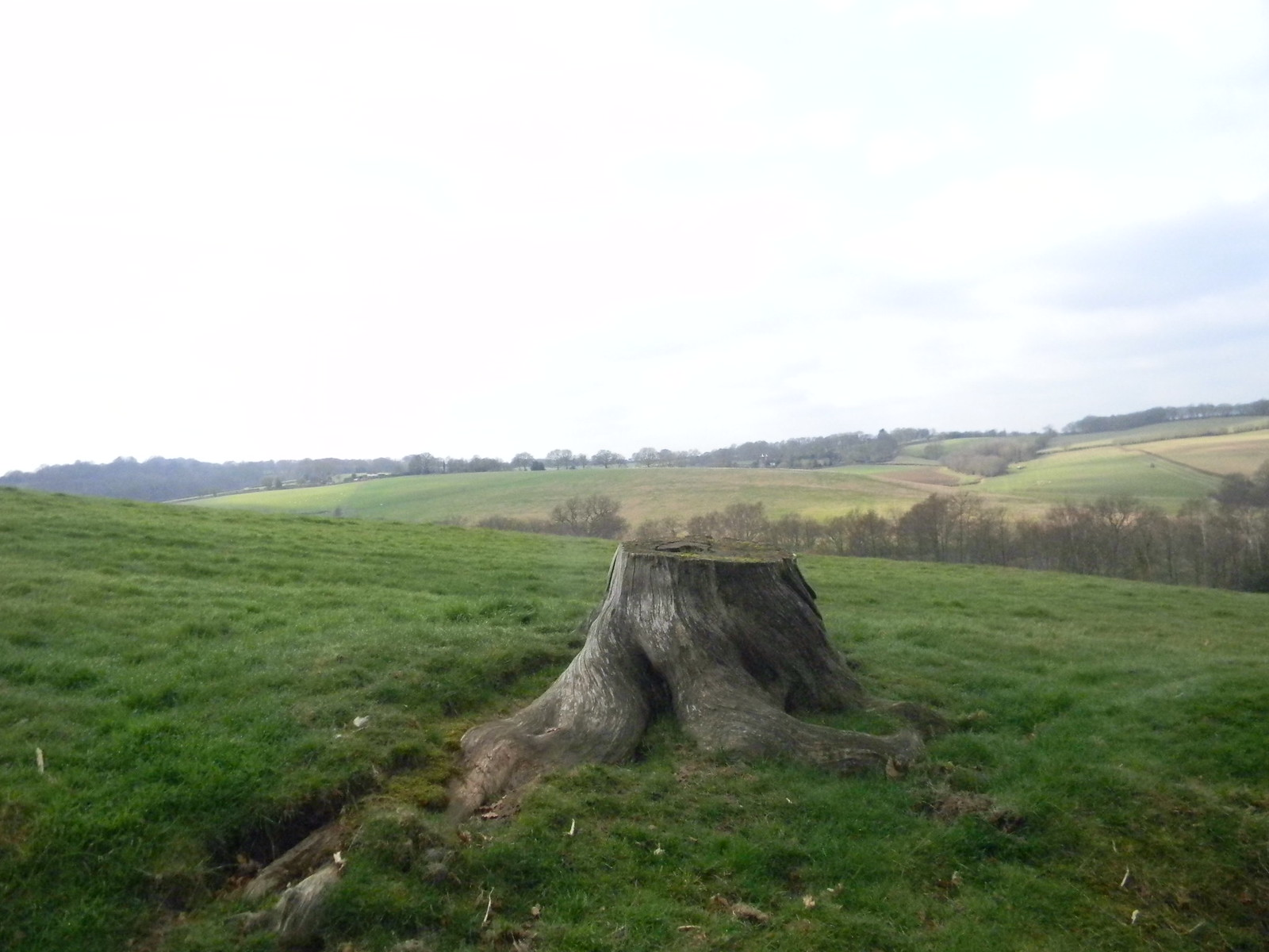 View with stump Robertsbridge to Battle