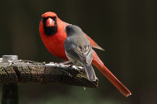 """When I grow up, I want to be a cardinal."""