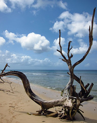 Heywoods Beach, St Peter.