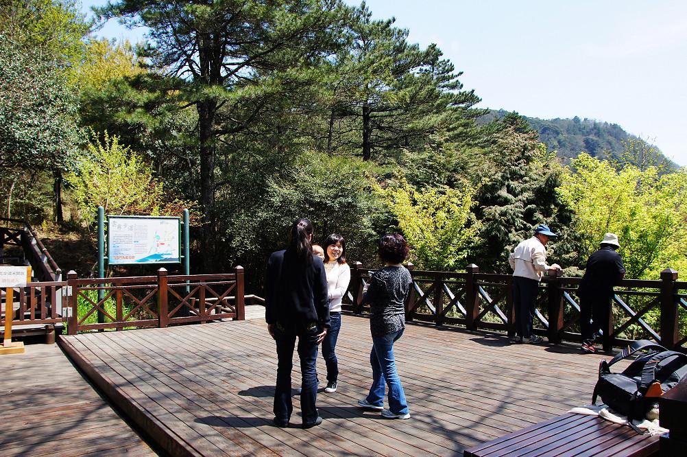觀霧巨木步道-002