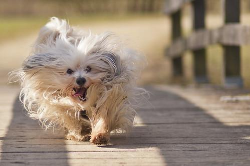 Hiro's smile by walking on a bridge