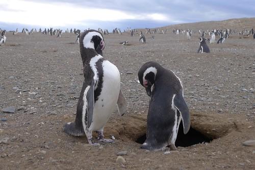 Punta Arenas-74