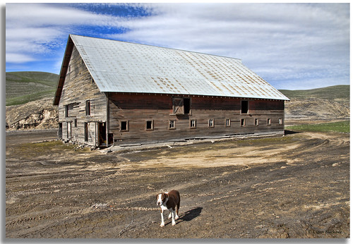 A dog and his barn