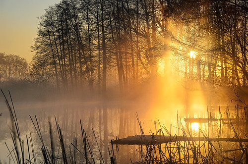 morning light sea mist nature germany landscape deutschland golden spring europe mood brandenburg dietrichbojko schmalersee