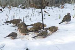 20120212 - Feeder Birds