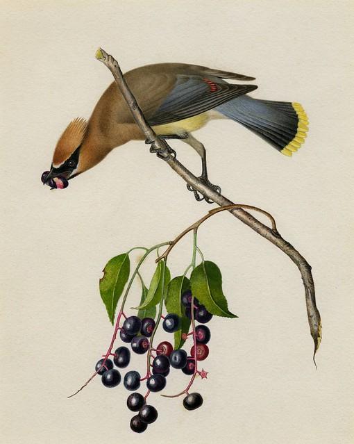 Massachussets ornithology