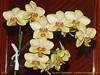 Orhideea Anului 2012 ... 6875493613_e0e523636d_t