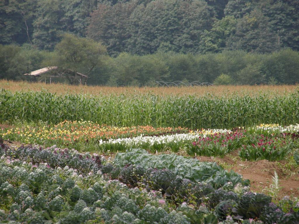 Certified Sustainable Flower Farm