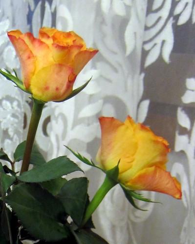 loppiaisruusut by Anna Amnell