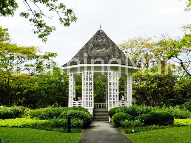 Singapore Botanic Gardens 03
