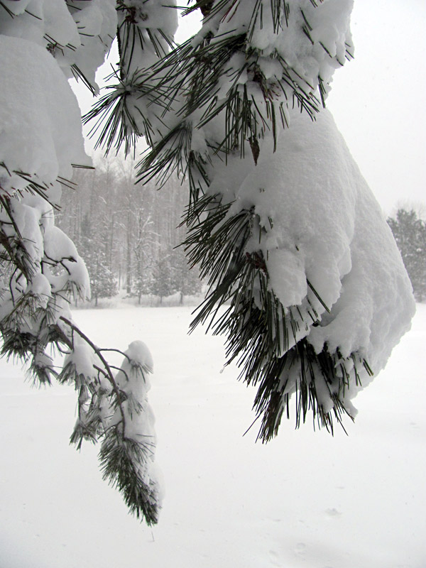 Snow storm :: tempête de neige