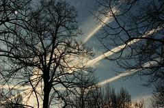 [フリー画像素材] 自然風景, 樹木, 飛行機雲, 風景 - イタリア ID:201203062000