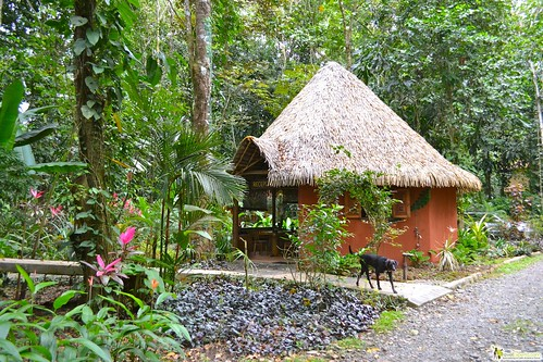 Family Friendly Jungle Lodge puerto viejo costa rica
