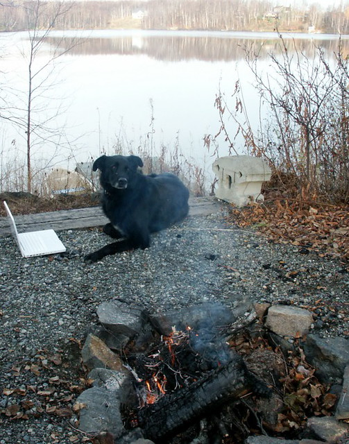 fire - dog - lake - labtop