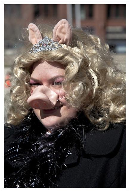 2012 Idiotarod 12 (Miss Piggy)