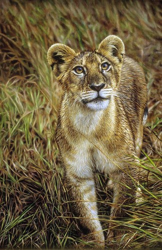 "'Inquisitive Cub' oil on board 24½"" x 16½"