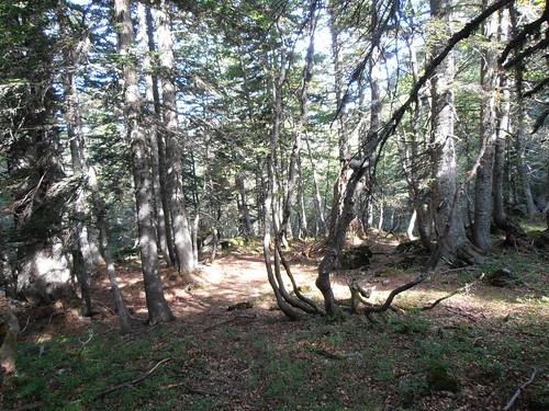 moundeilhs -septembre 2011 022