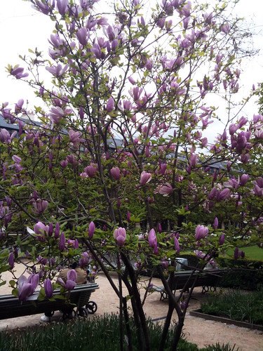 Spring in Paris – My French Life – Ma Vie Francaise