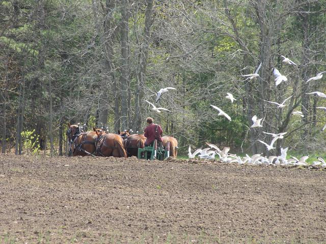 Essex Farms