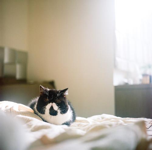[フリー画像素材] 動物 1, 猫・ネコ ID:201204031000