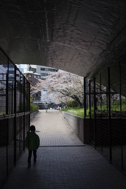 Hanami on the other side