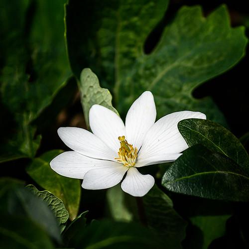 Indie Spring