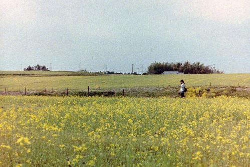 landscape 日本 nikonfe 宮城県 大崎市