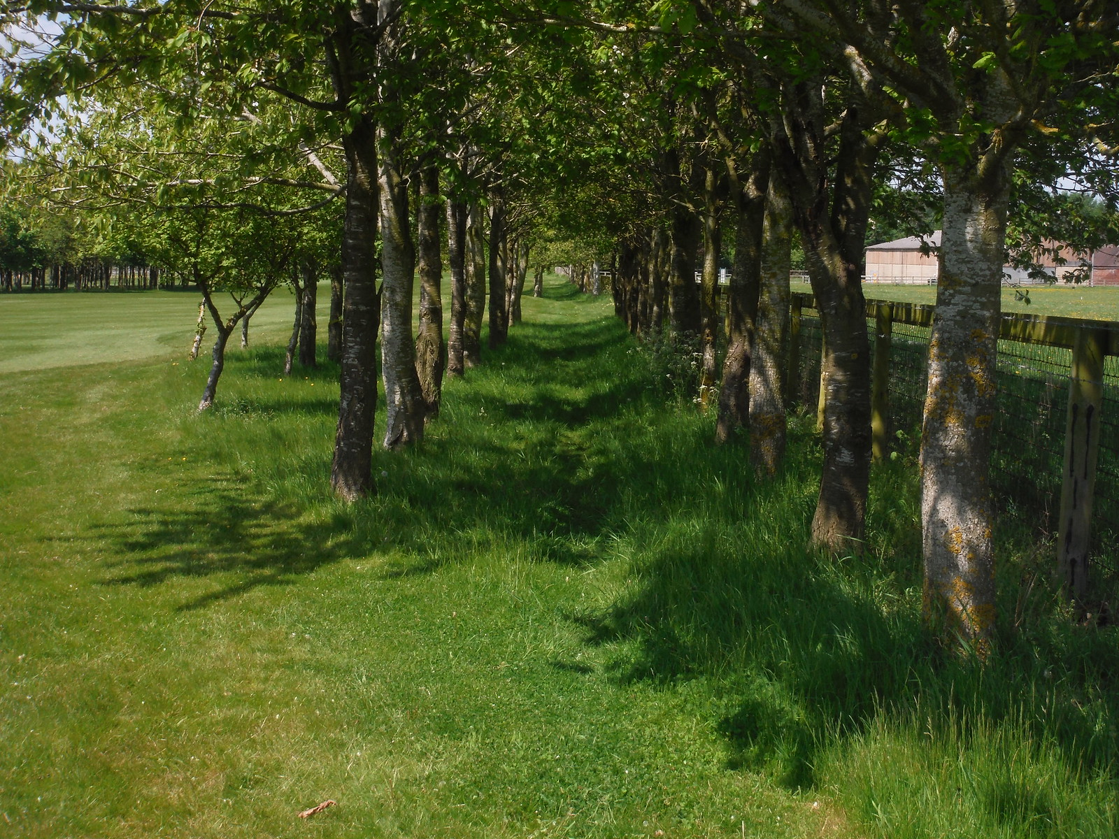 Path along Golf Course, Waterstock SWC Walk 190 - Thame Circular (Extension)