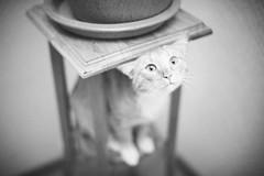 [フリー画像素材] 動物 1, 猫・ネコ, モノクロ ID:201203011000