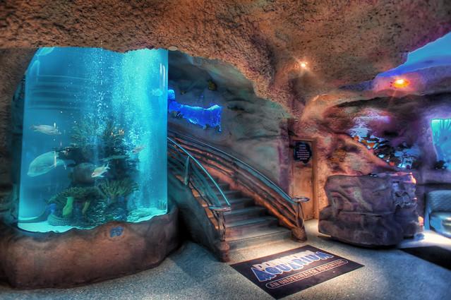 The Downtown Aquarium Flickr - Photo Sharing!