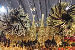 Dried weeds grown in Lancashire and sold expensively