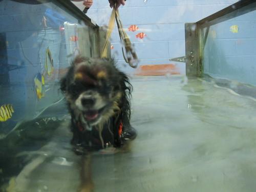 Enjoying a Wet Walk