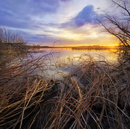 blue trees winter orange seascape reflection backlight sunrise landscape dead march spring sticks glow cloudy colorfull sony wideangle brush inspirational majestic slt 2012 arvada bramble verticalpanorama thicket leadinglines highquality interestinglight a55 sigma1020 vertorama tuckerlake