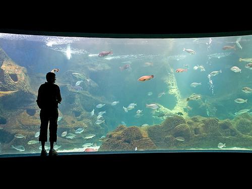 Aquarium d' Héraklion