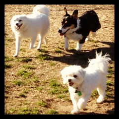 Feb 11, 2012 - fun but cold afternoon at the dog park!