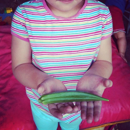 Our first Okra! by margoc