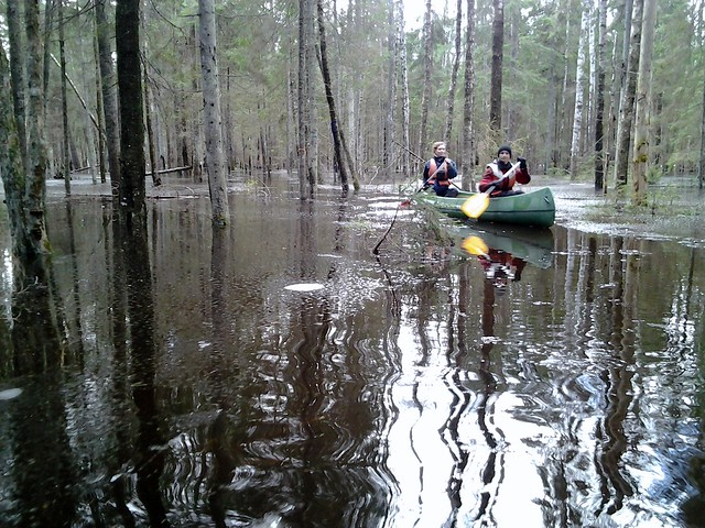 Sveriges Natur in Karuskose Flooded Forest
