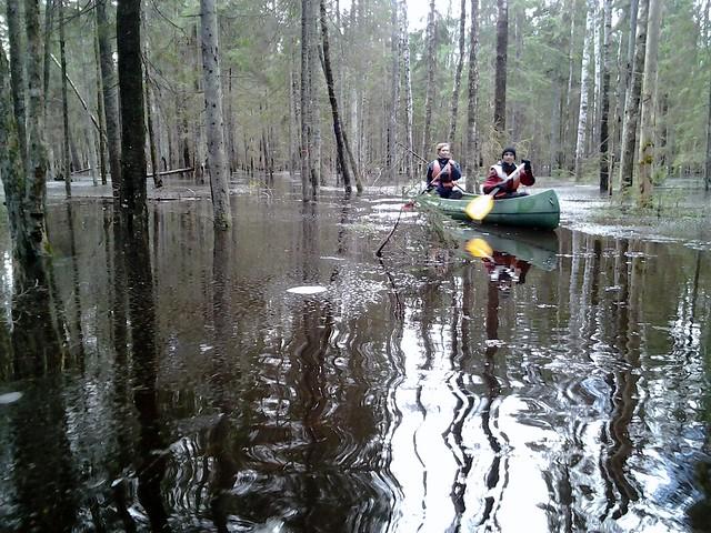 Sveriges Natur in Karuskose Flooded Forest