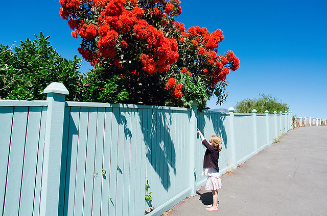 ... or that one. Red flowering tree meeting in Lyttelton.