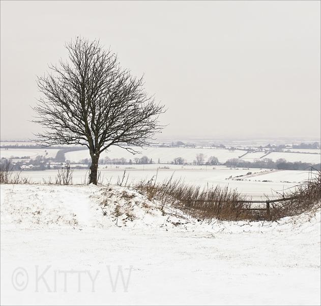 My Favourite Tree - in Winter