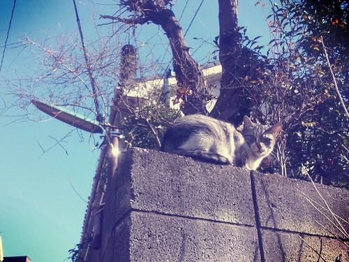 Aujourd'hui le chat