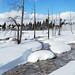 Yellowstone Winter: Scenics