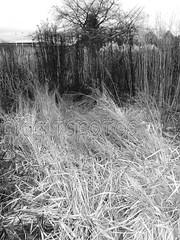 Winter Fields in B&W