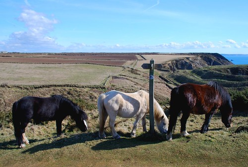 Ponies at Porth y Raw | by Barrie Foster1