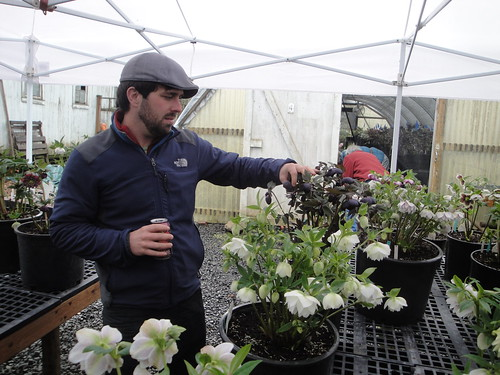 Matt checks out black and white hellebores